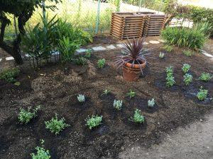 8月2日ハーブの日に憧れのハーブガーデンを作った。伊丹 土井庭苑 すごい。
