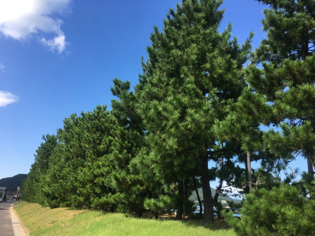 津田の松原の写真
