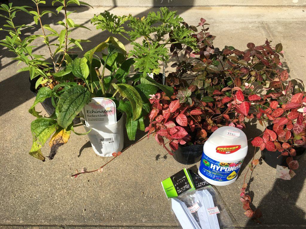 購入した植物