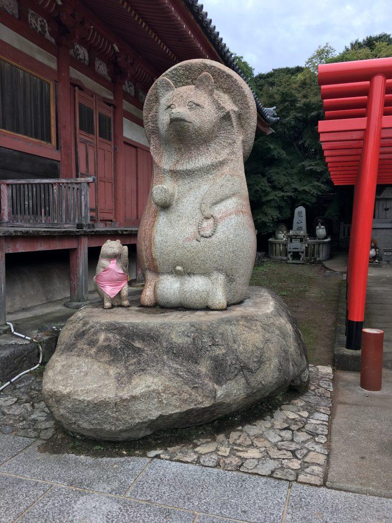 香川のたぬき