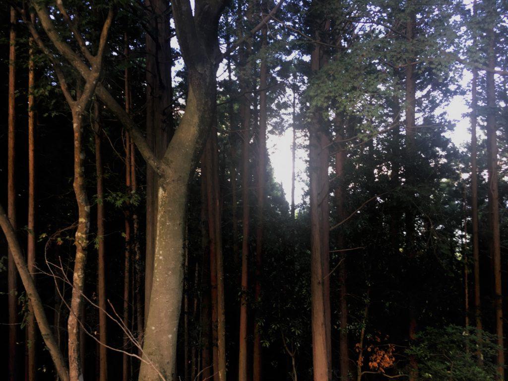 木々の間の光