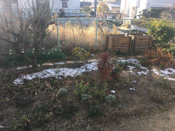 あやみんガーデンの庭
