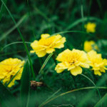 猪名川の花